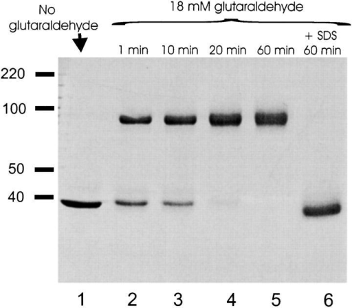 Glutaraldehyde Cross Linking Of EriC Was Treated With As In Materials And