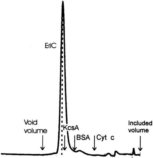 Superdex gel filtration. Purified EriC (230 μg) was applied to a Superdex FPLC column, and elution was monitored by 280-nm absorbance. A dashed line is drawn under the EriC peak; arrows mark the peak positions of a void volume marker (blue dextran), KcsA (74 kD), serum albumin (67 kD), cytochrome c (13 kD), and an included volume marker (imidazole).