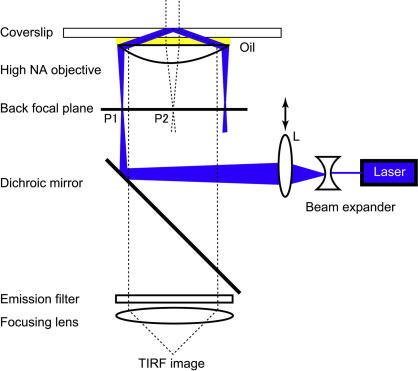 Arrangement for objective lens-type TIRF in an inverted microscope. Laser illumination through a side port requires a dichroic mirror cube facing the side. At the P1 position, the laser beam is focused to lead the critical angle propagation into the coverslip (total internal reflection). Moving the lens L transversely changes the angle of incidence, thus the laser beam moves from P1 (TIRF) position to P2 position (epifluorescence). This system allows to switch between both mode of illumination (TIRF and epifluorescence).