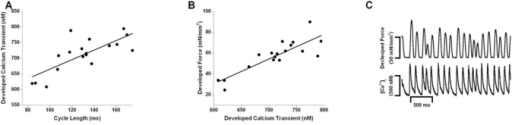 At an average cycle rate of 125 ms (8 Hz), a variation in inter-beat duration of 40% was applied. The correlation between the developed calcium transient and peak active force development (Fdev) is shown in panel A (R2 = 0.57, p=0.03) . Panel B demonstrates the positive correlation between the variations in cycle length and the developed calcium transients (R2 = 0.72, p=0.0006). In panel C, the top and bottom panel show the resulting intracellular calcium transients and twitch contractions respectively. The variation in inter-beat duration is associated with variations in the calcium transients.