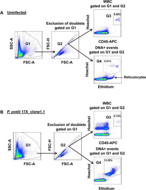 Flow Cytometry Gating Strategy For P Yoelii Parasitemi