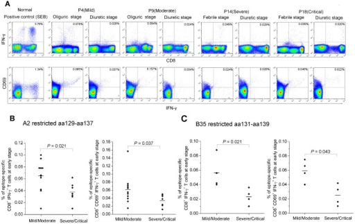 The frequency of IFN-γ produced by activated HTNV nucleoprotein epitope-specific CD8+ T cells in patients.(A) The intracellular cytokine staining assay was applied to detect the frequencies of epitope-specific IFN-γ production CD8+ T cells expressing the active marker CD69 in PBMCs from mild patient P4, moderate patient P9, severe patient P14, and critical patient P18. Each of the patients has two time points, including febrile/oliguric and diuretic stages. All the four patients are HLA-A2+ and stimulated with peptide aa129–aa137. FACS contour plots were gated on CD3+ CD8+ cells. Percentages of double-positive cells are shown. The healthy PBMCs stimulated with SEB (200 ng/ml) was used as a positive control. (B–C) The comparison of the frequency of epitope aa129–aa137 or aa131–aa139-specific CD8+ T cells secreting INF-γ or CD69 expression between mild/moderate patients and severe/critical patients at acute stage of the disease (Mann-Whitney U test). P values of ≤0.05 were considered statistically significant. IFN, interferon; SEB, Staphylococcal enterotoxin B.