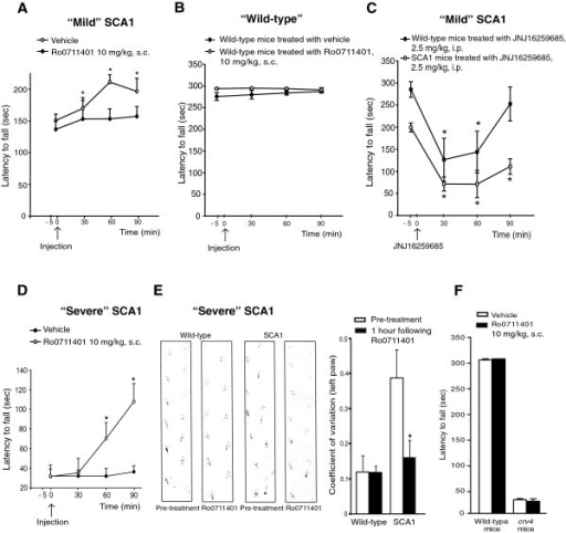 Acute treatment with the mGlu1 receptor PAM, Ro0711401, improves motor performance in symptomatic SCA1 mice. Effect of Ro0711401 on the rotarod in symptomatic SCA1 mice with mild motor impairment (A); values are means ± S.E.M. of 4 mice per group. *p < 0.05 vs. corresponding values at time 0; Two-way ANOVA for repeated measures + Fisher's LSD: F(3,21) = 7.621 and F(1,21) = 10.176 for time and treatment, respectively; and in wild-type littermates (B); data are means ± S.E.M. of 7 mice per group. Lack of effect of JNJ16259685 in SCA1 mice with mild motor impairment and wild-type (C), where data are means ± S.E.M. of 4 mice per group; *p < 0.05 vs. respective values at time 0. Two-way ANOVA for repeated measures + Fisher's LSD; F(3,18) = 34.38 and F(1,18) = 7.24 for time and treatment, respectively. Effect of Ro0711401 in symptomatic SCA1 mice with severe motor impairment (D); values are means ± S.E.M. of 5 mice per group. *p < 0.05 vs. corresponding values at time 0; Two-way ANOVA for repeated measures + Fisher's LSD; F(3,12) = 11.177 and F(4,39) = 9.982 for time and time x treatment, respectively. Paw print test in SCA1 mice with severe motor impairment and wild-type acutely treated with Ro0711401 (E). Data were quantified by calculating the coefficient of variation of 5 consecutive strides with the left paw of each mouse. Values are means ± S.E.M. of 9 mice. *p < 0.05 (One-Way ANOVA plus Fisher's PLSD) vs. SCA1 mice before the treatment. Representative traces were carried out 5 min prior and 60 min after drug injection. Motor performance on the rotarod of mGlu1-deficient crv4 mice and wild-type mice 1 hour following s.c. injection of vehicle or Ro0711401 (F). Values are means + S.E.M. of 4 mice per group.