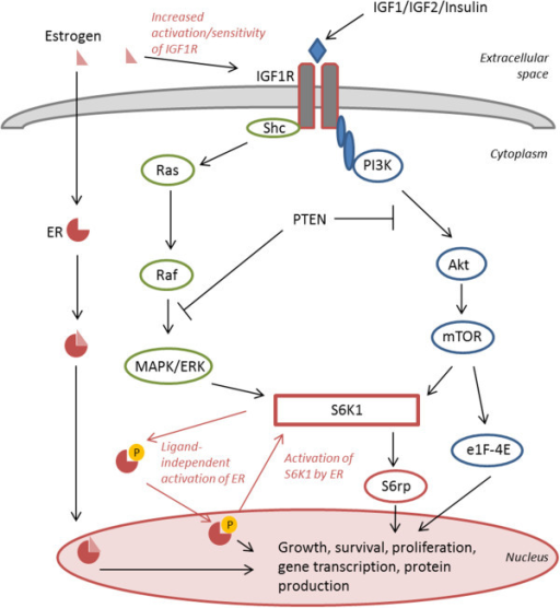 mechanisms of activation of nf b signaling pathway Mechanism of aberrant nf-κb activation through the canonical signaling pathway in human lymphomas nf-κb can be aberrantly activated in hl by signals from cd30, cd40, and rank, which induce the activation of the ikk complex via traf proteins.