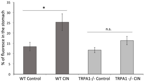 Effect of CIN gavage on gastric emptying of TRPA1 (-/-) mice.After a overnight fasting, WT and TRPA1 (-/-) animals received a single gavage of CIN (250 mg/kg bw) or an equivalent volume of water containing a fluorescent tracer. One hour after the gavage the presence of the dye in the stomach was measured. There was no significant difference in the content of dye in the stomach of TRPA1(-/-) animals gavaged or not with CIN, whereas we observed an increase of the presence of dye in WT animals gavaged with CIN compared to those gavaged with water. (*, p<0.05; n.s., not significant; n = 6; error bars: SEM).