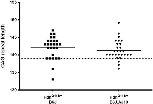 CAG repeat size of the knock-in alleles in HdhQ111/+B6J and HdhQ111/+B6J.AJ10 progeny. The mean CAG repeat size of the mice used in this study was 142.0 ± 3.2 for HdhQ111/+B6J (n = 27) and 141.3 ± 2.8 for HdhQ111/+B6J.AJ10 (n = 28). Solid line represents mean of CAG repeat for each genotype while the dashed line represents the CAG repeat size transmitted from the parental HdhQ111/+B6J mice (139 CAGs)