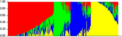 Population structure plot for the 257 entries based on 25,000 SNPs. The red, green, blue, and yellow bars correspond to the caudatum, kafir, guinea, and durra races, respectively. Vertical and horizontal axes represent the membership coefficient and genotypes, respectively.