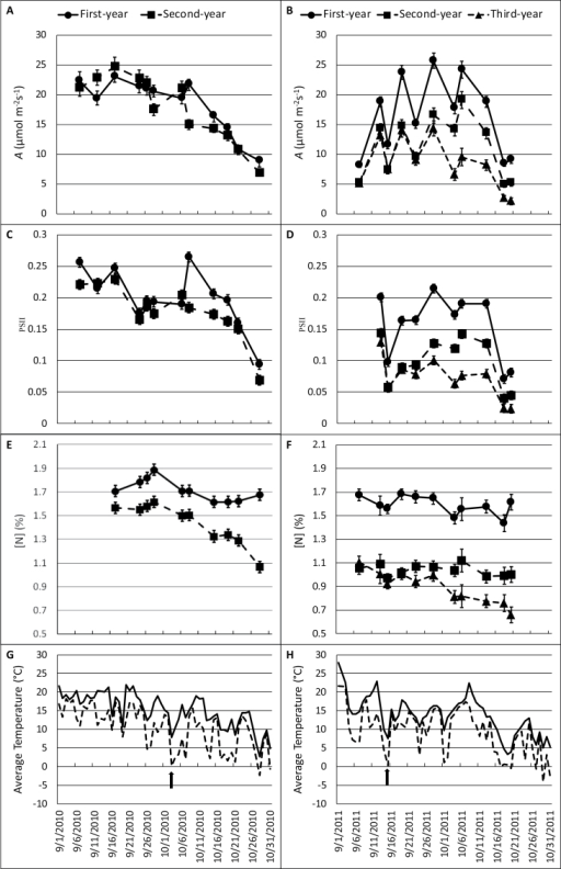 Miscanthus × giganteus senescence response to date and average daily temperature. Net CO2 assimilation rate (A, μmol m–2 s–1) (A, B), photosystem II efficiency (ΦPSII, dimensionless) (C, D), and total leaf N ([N], %) (E, F) were measured in autumn 2010 (A, C, E) and 2011 (B, D, F). Measurements were made on two randomly chosen plants per plot and were averaged within eight plots for first-year (closed circles), second-year (closed squares) and third-year (closed triangles) M. × giganteus on each date. Points plotted indicate the mean of these eight (n=8) observations within each stand age and date combination. Error bars indicate ±1 standard error of the mean. Average daily temperatures (solid line) and daily low temperatures (dotted line) were recorded at an adjacent (6.3 km NE) weather station and acquired from the Iowa Environmental Mesonet (http://mesonet.agron.iastate.edu/). Arrows indicate the first 'cold-shock' day of each growing season.