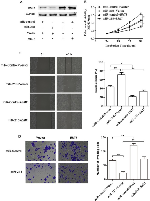 Partial reversal of the inhibitory effects of miR-218 on the ESCC cell phenotype by BMI1. (A) Western blot analysis of BMI1 protein levels in EC109 cells which were co-transfected with miR-218 mimics or miR-control and the BMI1 plasmid (without 3′-UTR) or vector control. (B) MTT assay of relative EC109 cell viability. (C) Wound healing assay. (D) Transwell invasion assay. Data are presented as the means ± SD from 3 replicate samples. *P<0.05 and **P<0.01.