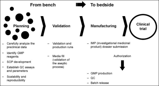 Summary of all the steps to be followed for the cell therapy translational process from the bench to the bedside.Abbreviations: GMP, good manufacturing practice; QC, quality control; SOP, standard operating procedure.