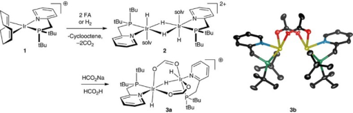 Catalyst initiation and molecular structure of active catalyst homologue 3b.3b={[(tBu2PCH2(2-py))Ir(H)]2(μ2-H)(μ2-κ,κ′-O2CCH3)2}+. Hydrogen atoms omitted. Ellipsoids are drawn at the 50% probability level. counterion, trifluoromethanesulfonate; solv, solvent.