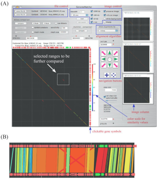 Example of GenomeMatcher analysis. Two sequences in the GenBank format are loaded and compared successively three times by bl2seq. Clicking the arrows besides the comparison image displays the text-based annotation information. (A) Clicking a stored image in the right image column converts it into a larger image. The black asterisks denote comparison ranges of the current image, and the red ones the ranges to be compared in the next analysis. (B) The representation of the comparison result of panel A in parallel view (parallel-flip-view, in which the upper sequence is flipped). See the instruction manual for more details.