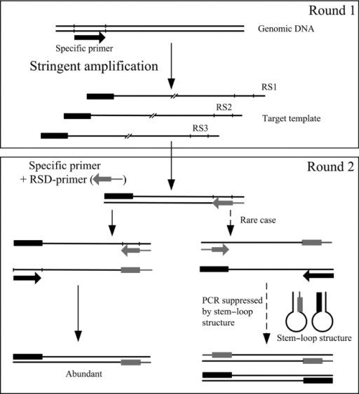 Schematic outline of RSD-PCR protocol for new gene clon | Open-i