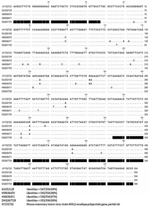 MMTV-like env gene sequencing. Comparison of env gene sequences amplified from INER6 (GU252129), HZ-101 (HM636471), HZ-14 (HM636470), and INER51 (DQ367729).