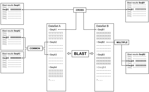 Pariga logical schema.Central columns represent the original input files, while results are indicated in the columns on the side. Boxes indicate logical operations that can be performed on the results. As an example: COMMON: which sequence(s) of the dataset B is(are) shared in BLAST results of sequence A2 and A3 of the dataset A? CROSS: once sequence A1 is selected from dataset A, in which results of the dataset B does it appear? MULTIPLE: which sequence of dataset A appears more than once (i.e. matches more than one region) in the results of sequence B2 of dataset B?