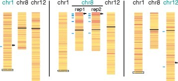 Silencing of endogenous genes upon ectopic XIST expression. Allelic inactivation of chromosomes 1, 8, and 12 is shown as a heat map following DOX induction of XIST in cells containing integrations into the chromosome listed in green. Colors denote the allelic expression change as assessed by RNA-seq (red = downregulation; yellow = no change) for those genes with allelic reads with FPKM ≥5. The integration site is marked as a black arrow; confirmatory pyrosequencing assays are indicated by blue lines, and the centromere is shown as a black line. For chromosome 1, the chromosome is truncated at the site of a translocation as it is unknown whether the integration is on the translocated chromosome (boxed region)