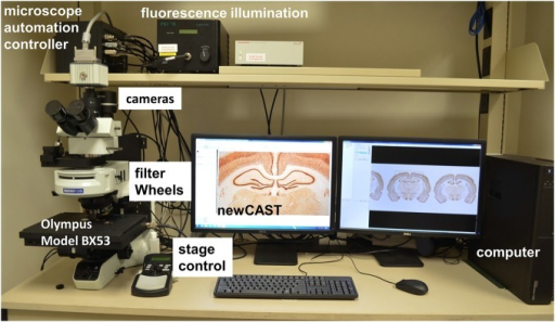 A computer-driven stereology system. Microscope automation controller manages stage movements (XYZ) of Olympus BX53 microscope, fluorescence filter and encoder for stereology newCAST program. For epi-fluorescence, the fluorescence illumination, filter wheels and specific CCD camera system (ORCA) are shown.