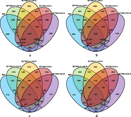 Venn Diagram of differentially expressed genes (DEGs) in leaves of the two pairs of rice NILs and IR64. Number of (a) up- and (b) down-regulated genes under severe (0.2 FTSW) WD treatment; number of (c) up- and (d) down- regulated genes under mild (0.5 FTSW) WD treatment