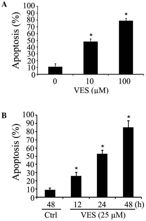 VES induces apoptosis in human esophageal cancer cells in a dose- and time-dependent manner. (A) EC-109 cells were treated with different concentrations of VES for 24 h and the apoptosis induced by VES was determined by FACS assay. *P<0.05 vs. VES treatment group. (B) Cells were treated with 25 µM VES for different times, and untreated control cells were cultured for 48 h. The apoptosis induced by VES was assessed by FACS assay. Data are presented as the mean ±standard error of the mean *P<0.05 vs. ctrl group. VES, vitamin E succinate; FACS, fluorescence-activated cell sorting; Ctrl, control.