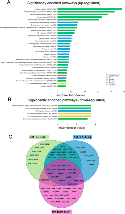 "Pathway analysis of the differentially expressed mRNAs.(A) The 30 most significant pathways of up-regulated mRNAs. (B) The significant pathways of the down-regulated mRNAs. Enrichment score values were calculated as -ln (p values). (C) Distinct and shared pathways in DM subgroups ""ILD+ Jo1−"", ""ILD− Jo1−"", ""ILD+ Jo1+"". The detailed information of the pathways involved in the figure is presented in Supplementary datasheet 4."