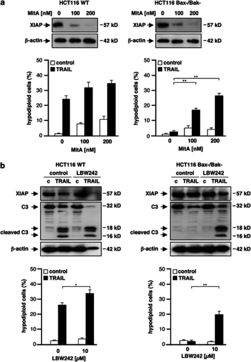 Downregulation or inhibition of XIAP by Mithramycin A or LBW-242, respectively, overcomes TRAIL-resistance. (a) HCT116 wt and Bax−/Bak− cells were pre-incubated with indicated concentrations of Mit A and downregulation of XIAP was observed upon immunoblotting (upper panel). Cells were then treated with TRAIL and cultured for additional 24 h. Measurement of apoptotic cells by flow cytometry revealed that Mit A sensitized Bax/Bak-deficient cells for TRAIL-induced apoptosis. Data expressed as mean values±S.D. from three experiments (lower panel). (b) To inhibit XIAP function, both cell lines were treated with 10 μM of the SMAC mimetic LBW-242 in addition to TRAIL. In HCT116 wt cells, TRAIL-induced caspase-3 processing was increased by LBW-242 (upper left). Increased caspase-3 processing was paralleled by enhanced induction of apoptosis (lower left). In HCT116 Bax−/Bak− cells, pro-caspase-3 was cleaved upon TRAIL-treatment. Proteolytic fragments, however, were detectable only upon addition of LBW-242 (upper right). Caspase-3 activation resulted in induction of apoptosis, indicating that LBW-242 can overcome TRAIL-resistance of Bax/Bak-deficient HCT116 cells (lower right). Statistical significances were determined using an unpaired Student's t-test. Levels of statistical significance are indicated with asterisks (*P<0.05; **P<0.01)