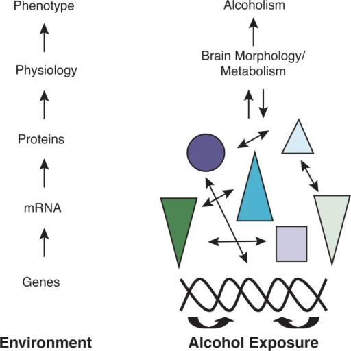 The contribution of genes to alcoholism progresses through a hierarchy of gene expression, protein interaction, and physiology within the context of environment. Though association, linkage, expression, proteomic, physiological, and environmental studies capture pertinent information from each hierarchical level, they do not independently capture the complex interaction actually responsible for disease. Colored shapes represent interacting gene products (i.e., RNA and proteins).