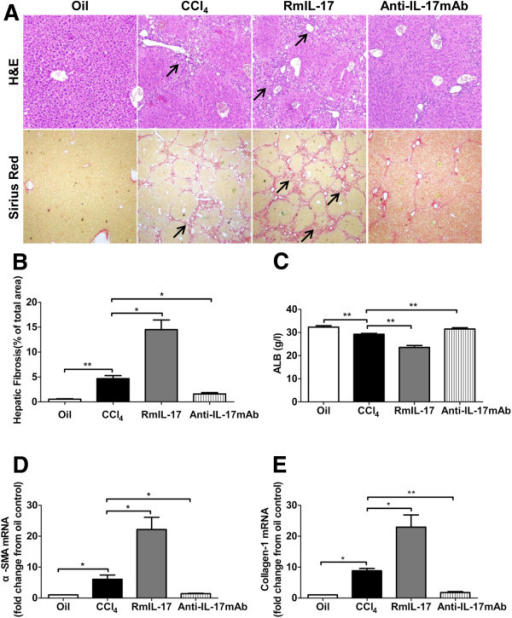 protective role of isolated rat hepatocytes against ccl4 Experimental study on isolated rat hepatocytes showed that hcho at low concentrations leads to oxidative stress vitamin c is a potent antioxidant agent and exerts a protective effect against oxidative stress [17.
