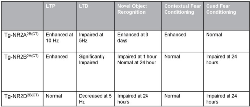 Summary of LTP, LTD and behavioral tasks results.The Tg-NRA2B(CT) mice had enhanced LTP, as well as enhanced long-term recognition memory and contextual fear conditioning. The Tg-GluN2B2A(CT) mice have significantly impaired LTD resulting in impaired short-term recognition memory and impaired long-term cued fear conditioning. The Tg-GluN2D2B(CT) mice have decreased LTD at 5 Hz and impaired long-term recognition memory and long-term cued fear memory.