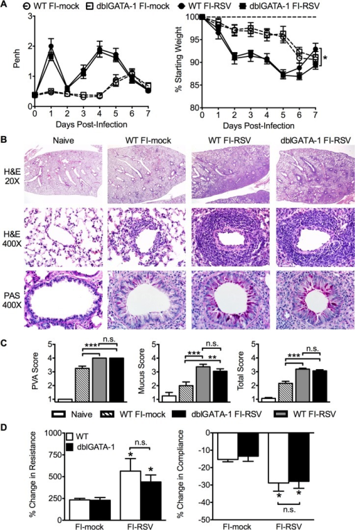 Eosinophils are not required to mediate FI-RSV VED.(A) WT and dblGATA-1 mice vaccinated with FI-RSV were assessed daily for airway obstruction and weight loss following RSV challenge. (B) Hematoxylin and eosin (H&E) and periodic acid-Schiff (PAS) staining were performed on lungs from immunized mice 4 days following RSV challenge. Numbers to the left indicate power of magnification. (C) Perivascular aggregates of leukocytes (PVA), mucus, and total histology scores from immunized WT and dblGATA-1 mice were determined on day 4 following infection. (D) Airway resistance and compliance were determined in vaccinated mice 4 days post-infection. Data is represented as percentage change following methacholine administration over baseline values obtained following saline treatment. Data are represented as mean ± SEM of two independent experiments (n = 12 mice total for A, n = 8 for B-D). Groups were compared using one-way ANOVA at each time point, * p<0.05, ** p<0.01, *** p<0.001.