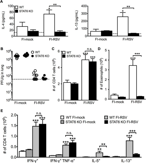 Th2-associated immune response is impaired in STAT6-deficient mice.(A) Cytokine protein amounts in the lungs of WT and STAT6 KO immunized mice were assessed on day 3 post-infection. Naïve controls were below the limit of detection for each cytokine. (B) RSV titers in the lungs of immunized WT and STAT6-deficient mice were determined via plaque assay on day 4 following RSV challenge. Number of (C) CD4 T cells and (D) eosinophils in the lungs of immunized mice were quantified on day 7 post-infection. (E) Number of Th1 and Th2 cytokine producing CD4 T cells in vaccinated WT and STAT6 KO mice on day 7 following RSV challenge were determined following PMA and ionomycin stimulation. Limit of detection for cytokine ELISA and plaque assay is denoted as a dotted line. Data are represented as mean ± SEM of two independent experiments (n = 8 mice total for A, B, n = 12 mice total for C-E). Groups were compared using one-way ANOVA at each time point, * p<0.05, ** p<0.01, *** p<0.001.
