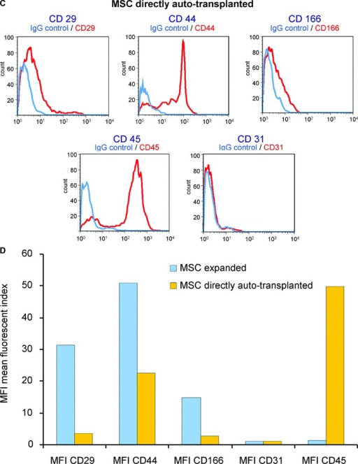 Sheep MSC were characterized using FACS and RT-PCR analysis. (A) With RT-PCR analysis CD29, CD44 and CD166 expression of MSC could be proofed on mRNA level. As indicated by increased CD45 expression, ratio of hematopoietic cells was higher in directly auto-transplanted MSC as compared to expanded MSC. (B–D) FACS analysis revealed sheep MSC to express CD29, CD44 and CD166. Expanded MSC (B) were negative for the hematopoietic markers CD31 and CD45. Directly auto-transplanted cells (C) had a different expression pattern than expanded MSC. The directly auto-transplanted MSC had a weaker CD29 and CD166 but a stronger CD45 expression. Mean fluorescent indices are shown in (D).