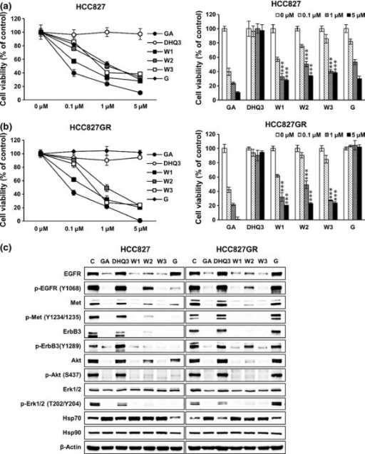 WK88-1 suppresses the proliferation of gefitinib-resistant non-small cell lung cancers (NSCLCs) via the downregulation of oncogenic RTKs. Gefitinib-sensitive HCC827 cells (a) and resistant HCC827GR cells (b) were treated with the indicated concentration of GA derivatives for 3 days, and cell proliferation was estimated using the MTS assay. Cell viability relative to controls was determined after 3 days. Data shown are the representative of 5 independent experiments. Error bars represent the mean ± SD. Statistical significance was determined by the Student's t-test (***P < 0.001). Effect of GA derivatives on the expression or activity of EGFR, Met, ErbB3, and downstream proteins (c). Cells were treated with 1 μM GA derivatives for 24 h and whole cell lysates were assayed by Western blot. β-Actin was used as a loading control. GA, Geldanamycin; G, Gefitinib; W1, WK88-1; W2, WK88-2, W3, WK88-3.