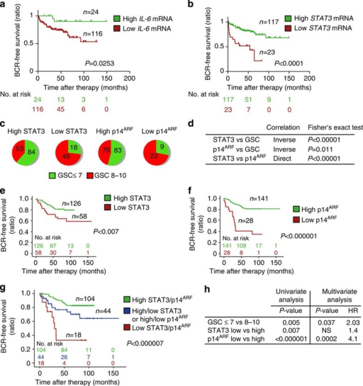 Loss of STAT3 and/or p14ARF expression predicts early BCR in patients with PCa.(a,b) Kaplan–Meier analysis including number at risk of patients stratified into high or low lL6- and STAT3 mRNA expression predicting biochemical recurrence (BCR) of the Taylor data set35. (c) Distribution of STAT3 and p14ARF protein expression with low (≤7) or high (8–10) GSC in tumour specimens from men diagnosed with PCa. (d) Fisher's exact test of data shown in c and correlation of STAT3 to p14ARF expression. (e) Kaplan–Meier analysis of BCR-free survival ratio based on STAT3 protein expression in a panel of 204 PCa patients. (f) Kaplan–Meier analysis of BCR-free survival ratio based on p14ARF protein expression in a panel of 204 PCa patients. (g) Co-expression analyses of BCR-free survival of STAT3 and p14ARF. (h) Univariate and multivariate analyses of GSC, STAT3 or p14ARF protein levels. Data from a,b,e,f and g were analysed by log-rank test.