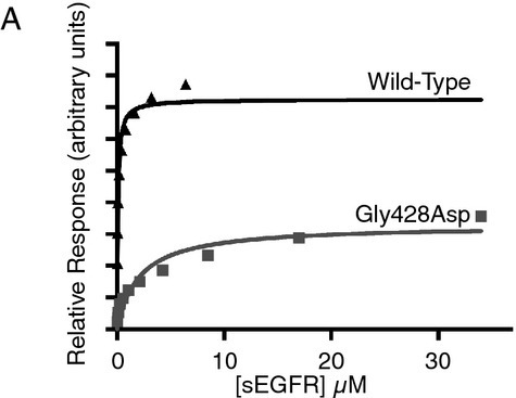 Binding of wild-type and G428D sEGFR to immobilized EGF, assessed using surface plasmon resonance (SPR). Equilibrium responses relative to a blank surface are plotted as a function of injected receptor concentration.