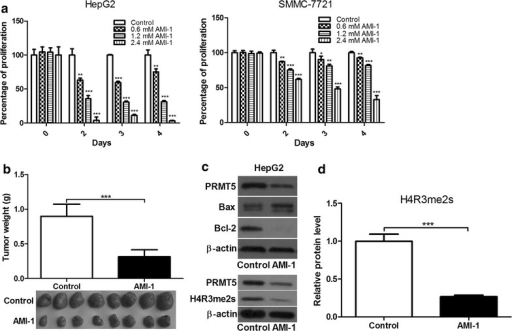 AMI-1 inhibits HCC cell growth in vitro and in vivo. a The effect of AMI-1 on the proliferation of human HCC cell lines. b The effect of AMI-1 on tumor formation in a nude mouse xenograft model. c The expression of Bax, Bcl-2 and H4R3me2s in HepG2 cells treated with AMI-1 for 72 h. d Densitometric analysis of band intensities. β-actin was loading control. Control refers to vehicle-treated group