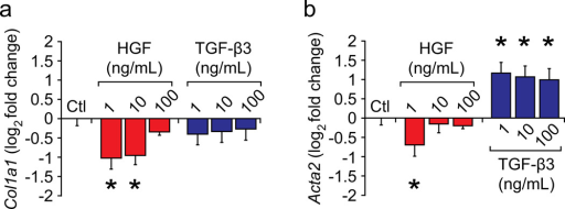 Effect of growth factor stimulation on scar-related transcriptional activityExogenous HGF stimulation downregulated Col1a1 (a) and Acta2 (b) transcription in scar VFFs at P1 in a dose-dependent manner, whereas exogenous TGF-β3 stimulation upregulated Acta2 transcription only (b). Data are presented as mean fold change ± s.e.m. versus the untreated control (Ctl) condition and are log2-transformed to best represent bidirectional stimulation effects. All experiments were performed with n = 4 biological replicates per condition. *, p < 0.05.
