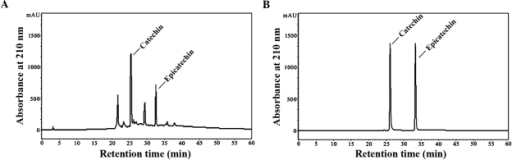 HPLC analysis of GSPA. (A) Normal-phase-HPLC chromatograms of GSPA. (B) Normal-phase-HPLC chromatograms of catechin and epicatechin. HPLC, high-performance liquid chromatography; GSPA, grape seed proanthocyanidin.
