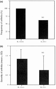 Incidence and severity of arthritis in knees of IL-12 knockout mice (IL-12–/–) (n = 8) in comparison with their wild-type littermates (IL-12+/+) (n = 9), 3 d after intra-articular inoculation with 6 μg CpG ODN. (a) Incidence. (b) Severity. NS = not significant.