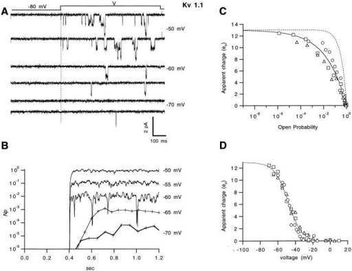 Limiting-slope measurement of the charge in Kv1.1 channels. (A) Single-channel openings from a cell-attached patch containing n = 125 channels, induced by 800-ms depolarizations from −80 mV to the potentials shown. (B) The reconstructed time course of NP, plotted semilogarithmically. (C) The apparent charge qs, computed from P(V) according to  and plotted as a function of open probability P. The continuous curve is the fourth power of a Boltzmann function with a total charge of 13 eo; the dotted curve is a single Boltzmann function with the same amount of charge. Different symbols represent different experiments. (D) Values of qs as a function of voltage. The continuous curve is a fitted Boltzmann function representing the voltage dependence of charge movement, computed with qT of 13 eo.