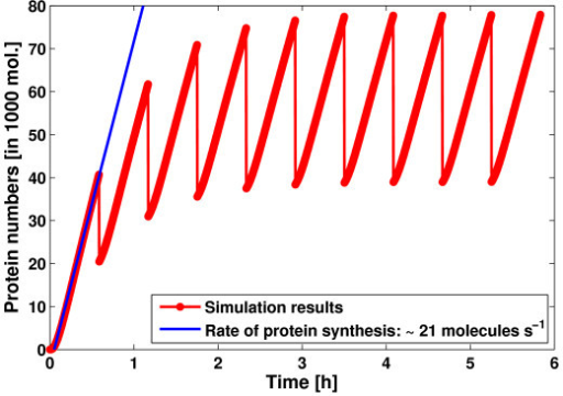 Results for the LacZ model. Average results of 1,000 simulations are shown for the LacZ protein over ten bacterial generations (red). After each generation (2100 s) the number molecules for each species was divided by 2 to simulate cell division. The blue line shows a linear fit to the increasing LacZ concentration during the first generation. This yields a rate of protein synthesis of 21s-1.