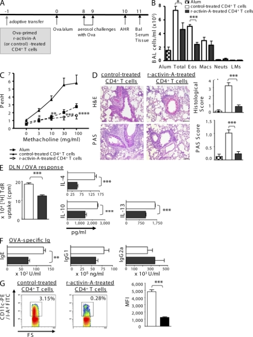Activin-A–induced regulatory T cells protect from allergic airway disease upon transfer in vivo. (A) CD4+ T cells (obtained as in Fig. 3) were treated with either PBS or r-activin-A and adoptively transferred to BALB/c mice before OVA/alum immunization and OVA challenge. (B) BAL differentials from mice that received r-activin-A– or PBS-treated CD4+ T cells, or from the alum controls. Results are expressed as means ± SEM (n = 5–7 mice per group in two separate experiments). Statistical significance was obtained by an unpaired Student's t test (*, P = 0.0407; ***, P = 0.0007). (C) AHR is depicted. Results shown for PenH are expressed as means (n = 5–7 mice per group in two separate experiments). Data were analyzed by two-way ANOVA for repeated measures, followed by an unpaired Student's t test (*, P = 0.0341; **, P = 0.0003; ***, P = 0.0004; ****, P = 0.0017). (D) Representative photomicrographs and histological scores of H&E-stained (***, P < 0.0001) and PAS-stained (***, P = 0.0004) sections. Error bars depict means of groups. Results are means ± SEM (n = 5–7 mice per group in two independent experiments). Bars, 100 µm. (E) DLN cells were restimulated ex vivo with OVA. Proliferation was measured (***, P = 0.0002). IL-4 (***, P < 0.0001), IL-13 (***, P < 0.0001), and IL-10 (***, P = 0.0008) in supernatants are shown. Results are shown as means ± SEM (n = 5–7 mice per group in two separate experiments). (F) OVA-specific IgE (**, P = 0.0009), IgG1 (P = 0.1259), and IgG2a (P = 0.4556) in the sera of mice. Results are means ± SEM (n = 5–7 mice per group in two independent experiments). (G) Flow cytometry panels of gated CD3−CD11c+ DLN cells from recipient mice stained for I-Ad. Numbers above boxed areas indicate the percentage of DLN cells in the outlined gate. The mean fluorescence intensity (MFI) of CD3−CD11c+I-Ad+ cells in DLNs of mice that received CD4+ T cells treated with PBS or r-activin-A is depicted (***, P < 0.0001). Values are means ± SEM (n = 5–7 mice per group in two separate experiments). Eos, eosinophils; FS, forward scatter; LMs, lymphomononuclears; Macs, macrophages; Neuts, neutrophils.
