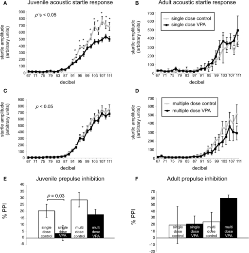 VPA-treated rats exhibit abnormal startle responses and prepulse inhibition. Acoustic startle response of animals receiving a single dose (A,B) or multiple doses of VPA (C,D). (A) Juvenile rats receiving a single dose of VPA show decreased responses to high intensity acoustic stimuli. (B) These changes are reversed in adult rats. Juvenile (C) and adult (D) rats treated with multiple doses of VPA show no difference from controls. (E,F). Juvenile and adult prepulse inhibition. (E) Juvenile rats treated with a single dose of VPA show decreased prepulse inhibition. (F) This is reversed in adult rats. Juvenile and adult rats treated with multiple doses of VPA respond similarly to controls.