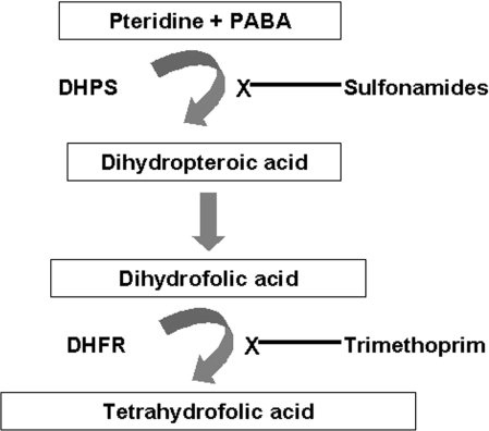 pneumocystis prophylaxis steroids