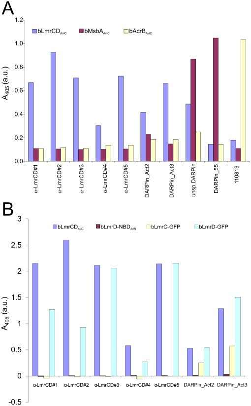 "Identification and characterization of DARPin binders by ELISA(A) Specificity ELISA using bLmrCDAviC, bMsbAAviC and bAcrBAviC as target proteins. Seven DARPins (α-LmrCD#1-5, DARPin_Act2 and DARPin_Act3) were found to be highly specific for bLmrCDAviC. Many initial DARPin binder-hits promiscuously bound to bLmrCDAviC, bMsbAAviC and bAcrBAviC as exemplified with the ""unsp. DARPin"" and were therefore not useful for further analysis. DARPins specific for bMsbAAviC (DARPin_55) and bAcrBAviC (110819) were used as a positive control. (B) ELISA analyzing binding of the LmrCD-specific DARPins shown in (A) to LmrC (bLmrC-GFP), LmrD (bLmrD-GFP) and the nucleotide binding domain of LmrD (bLmrD-NBDAviN). Binding to LmrCD (bLmrCDAviC) was confirmed as positive control."