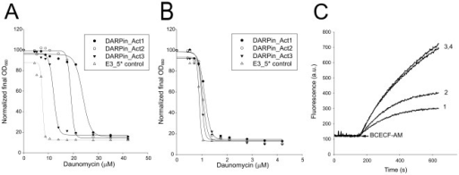Identification of LmrCD-activating DARPins.(A) Overexpression of DARPin_Act1 (•), DARPin_Act2 (○), DARPin_Act3 (▾) in wildtype L. lactis increases the resistance towards daunomycin compared to cells expressing control DARPin E3_5* (not interacting with LmrCD) (Δ). (B) No differences were observed when experiments in (A) were performed with cells lacking the chromosomal copy of lmrCD. (C) BCECF-AM transport measurements in pre-energized wildtype L. lactis cells demonstrate activation of LmrCD-mediated extrusion upon expression of DARPin_Act2 (trace 1) but not of control DARPin E3_5* (trace 2). No activation of LmrCD activity was observed upon expression of DARPin_Act2 (trace 3) or control DARPin E3_5* (trace 4) in L. lactis ΔlmrCD cells. Shown are representative data from at least three independent measurements (n≥3).