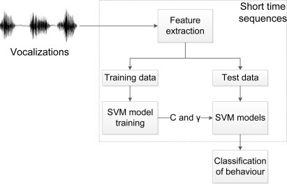 The flow of behaviour classification. The audio data is divided into short time sequences and feature extraction, modeling and classification is performed.