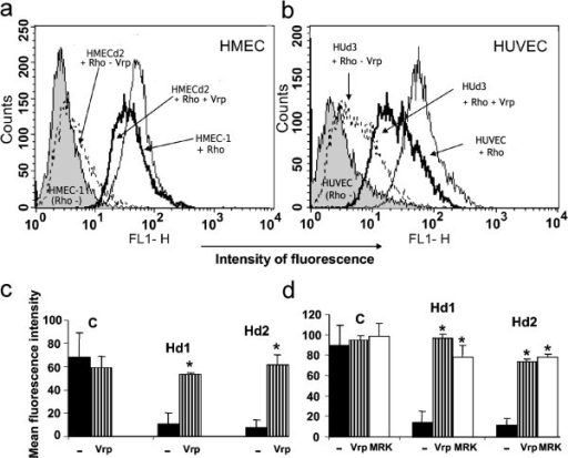 Endothelial cells express functional P-gp protein. Panel a and b: Verapamil blocks Rho efflux in endothelial cells. Dox- or noninduced HMEC and HUVEC cells were incubated in the absence or presence of Rho for 1 hour at 37°C. Rho accumulation was inhibited by the addition of Verapamil (Vrp) at 30 μM to the cell incubation mixture. The cells were analyzed in the flow cytometer. Panel c and d: Activity of endothelial P-gp is blocked by Verapamil and MRK16. Parental HMEC, HMECd1, and HMECd2 cells were incubated with 1 μM (c) or 2 μM (d) Rho for 1 hour at 37°C in the absence or presence of 30 μM Verapamil or 10 μg/ml MRK16 (MRK). Rho accumulation was measured by flow cytometry and quantified as the MFI. The background fluorescence level, determined using cells not exposed to Rho, was subtracted from the data. Results are expressed as the mean±SEM of 3 separate experiments. *p < 0.025, **p < 0.01.