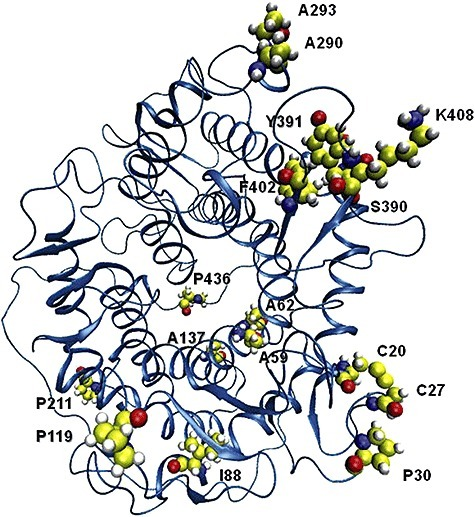 Three‐dimensional structure of the catalytic domain of GA showing the location of the mutations in CR2‐1.