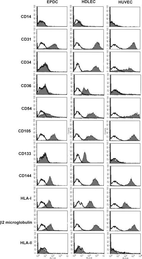Comparative expression of surface markers in cultured EPC-derived cells, HDLEC and HUVEC by flow cytometric analysis. Cells were labelled with markers for EC, haematopoietic stem cells and monocytes. The black histograms outline the region of fluorescent intensity of the specific antibody and the white histograms that of the negative control antibody. These graphs are representative of five independent experiments.
