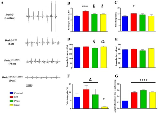 Effect of Dmlc2 mutations on pulse song properties.(A) Representative pulse song oscillograms from Control, Ext, Phos and Dual males (top to bottom panels, respectively). (B) Phos and Dual males sing with similar cycles per pulse (CPP) and (C) pulse length (PL) compared to Control males. Ext males produce songs with higher CPP and longer PL. (D) All the mutant males produce pulse song with normal intrapulse frequency (IPF), with only the Phos mutants' IPF showing a slight reduction compared to Ext and Dual. (E) None of the mutations affect interpulse interval. (F) The Dual mutant has significantly reduced pulse duty cycle compared to Control, Ext, and Phos. (G) Amplitude ratio (AMP-RT) of consecutive sine to pulse song is significantly higher in individual (Ext, Phos) and Dual mutants compared to Control. n = 7–8 males for each line. *(p<0.05), ***(p<0.001), ****(p<0.0001) indicate significant differences from Control. § (p<0.05), Ω (p<0.05) and Δ (p<0.05) indicate significant difference from Ext, Phos and Dual mutants, respectively. Error bars indicate SEM.